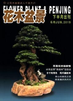 花木盆景(盆景赏石)
