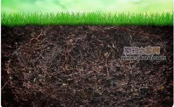 土壤改良论文